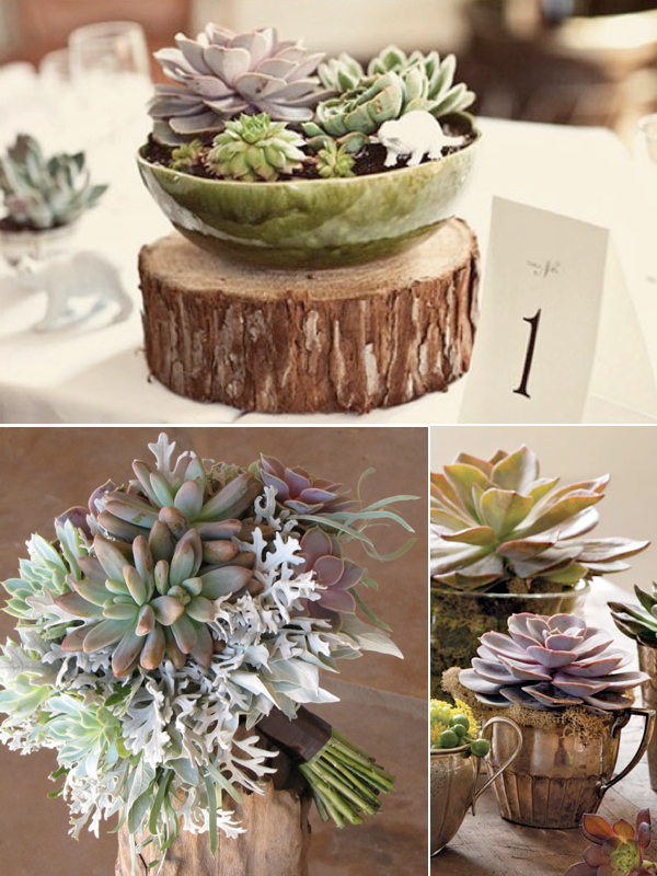 Succulents as alternatives to flower decor