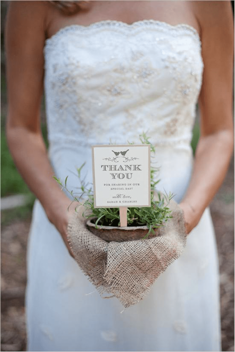 potted herbs wedding favor