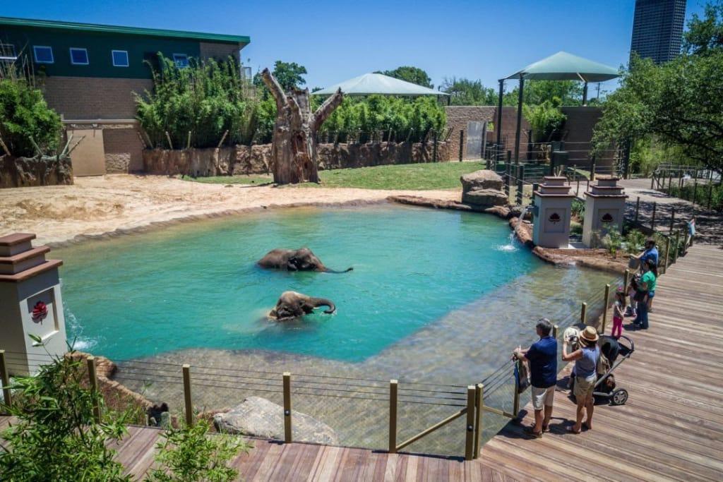 proposal idea houston zoo