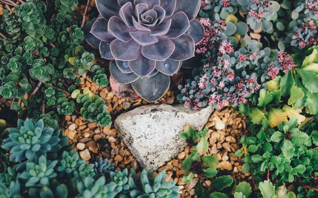various colorful succulents in the ground