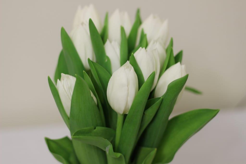 ivory tulip arrangement