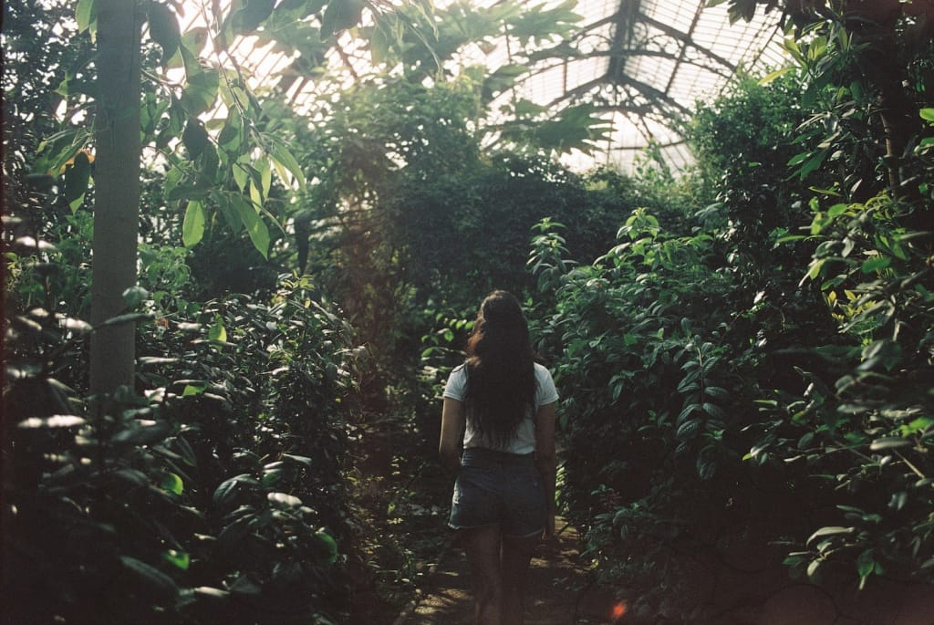 woman stands in indoor garden of green foliage as proposal setting