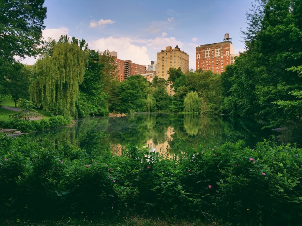 park filled with green foliage as proposal setting