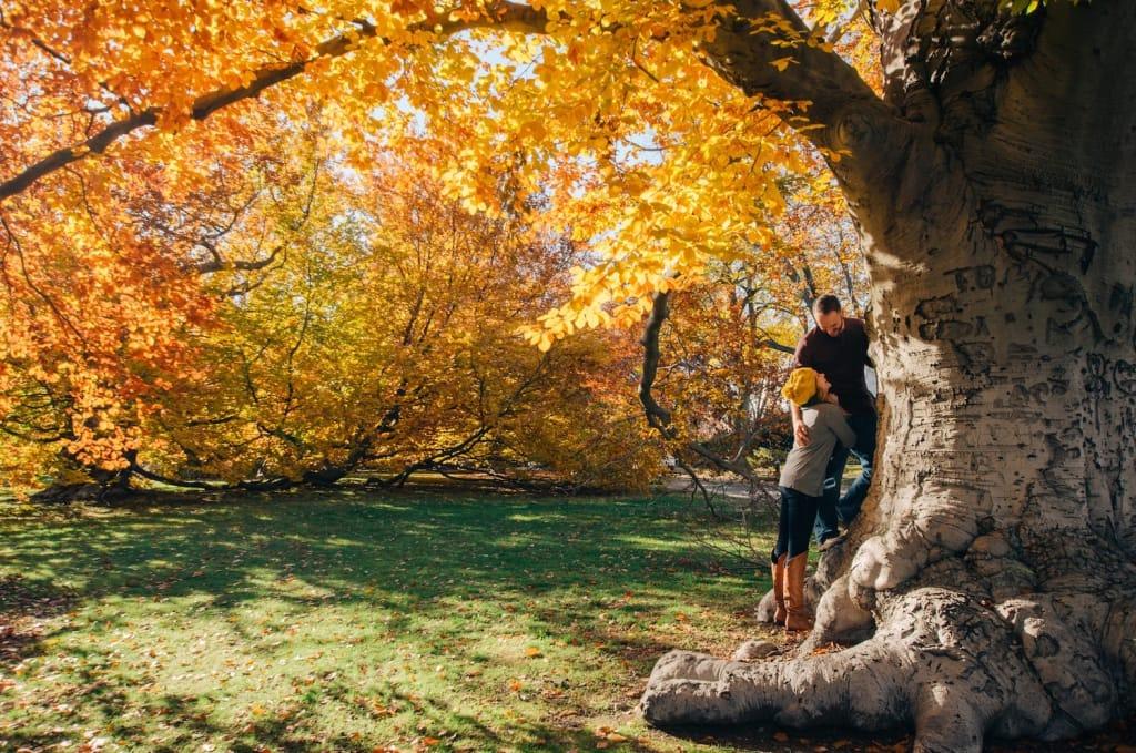 fall proposal idea park