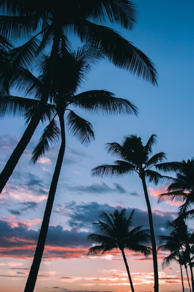 palm trees against a blue and crimson sky as proposal setting