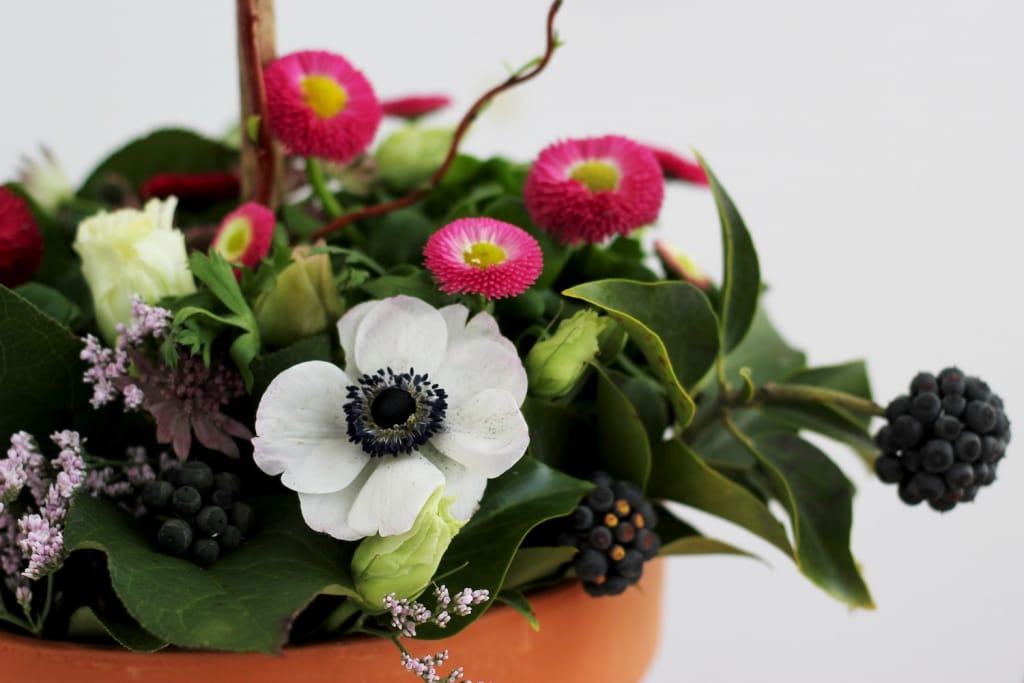 white anemone in potted planter