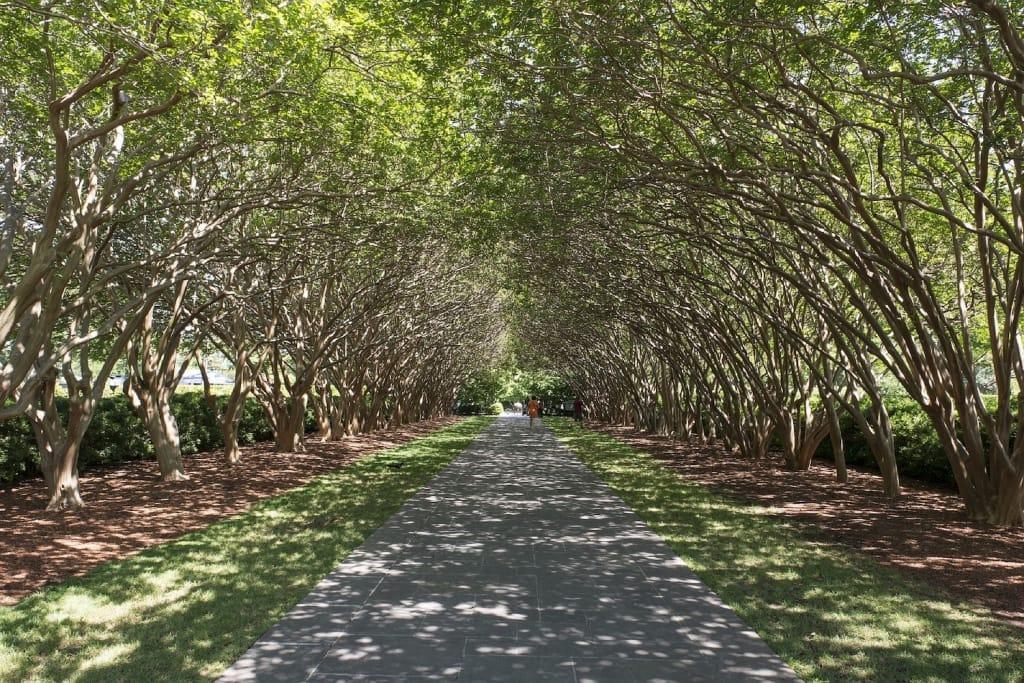 dallas proposal idea arboretum and botanical garden