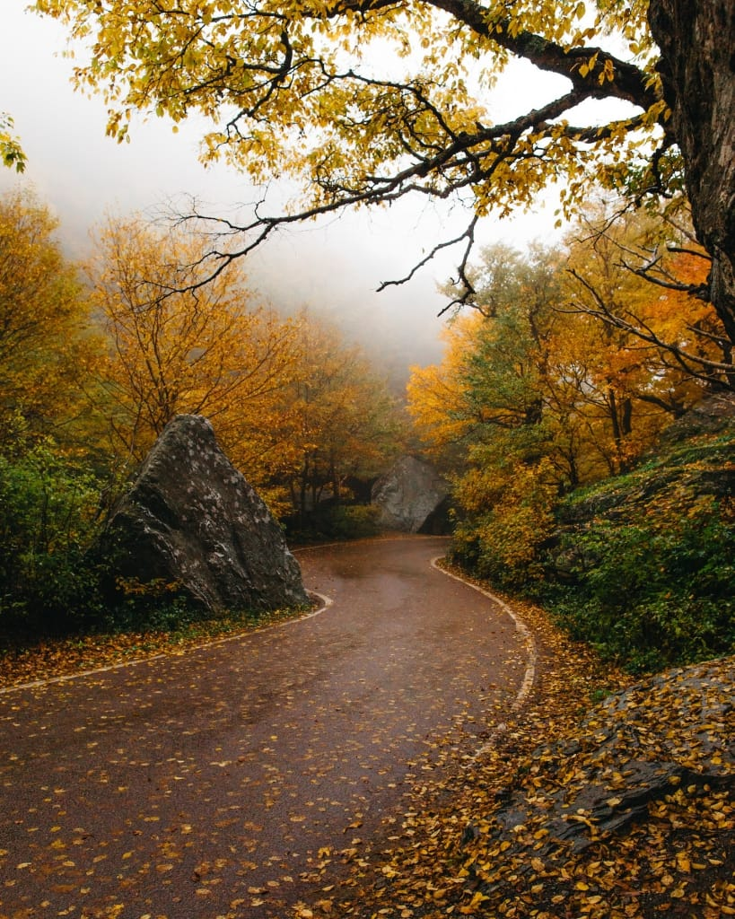 wet winding road surrounded by yellow-leaved trees in autumn as proposal setting